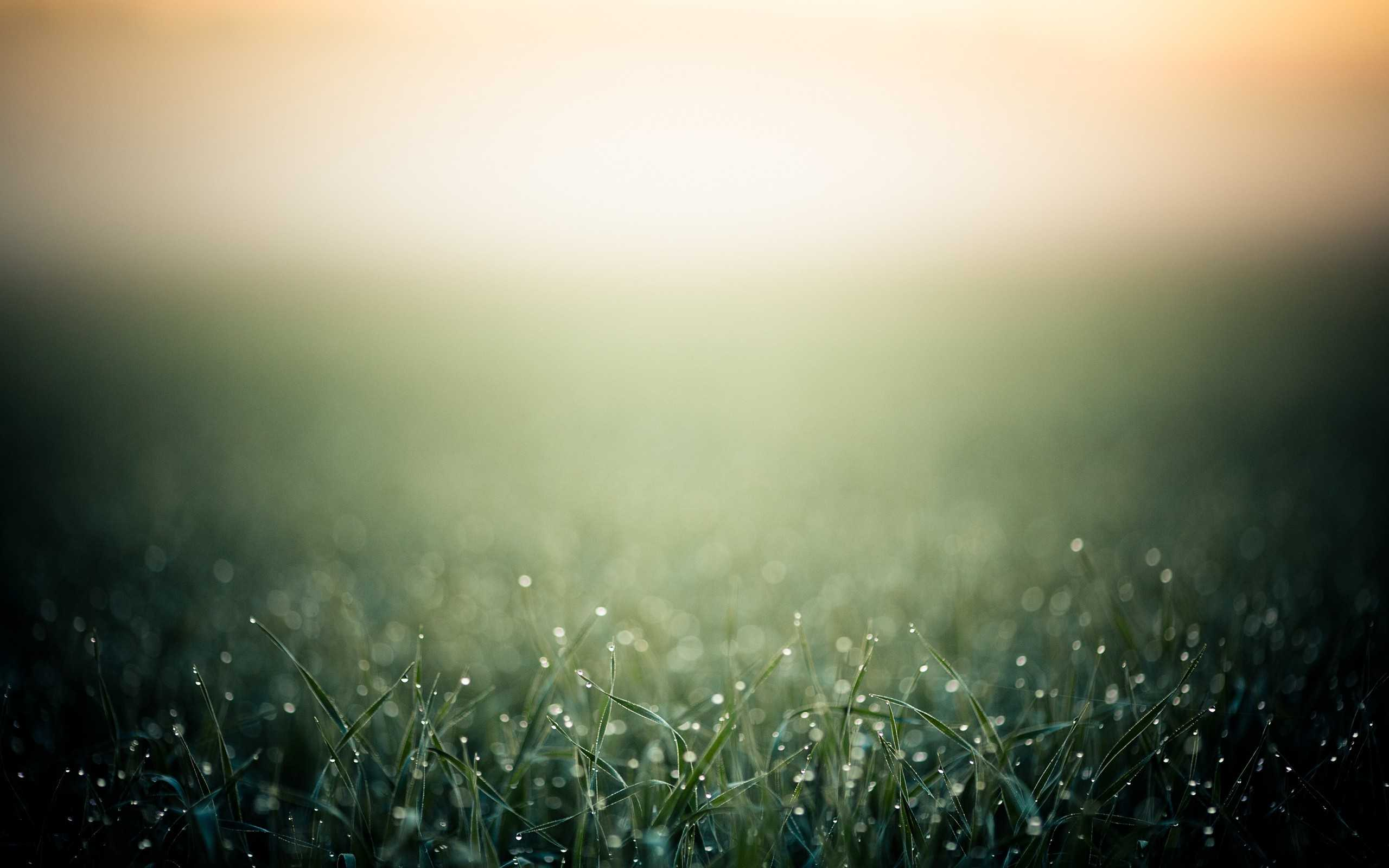 2-grass-wallpaper